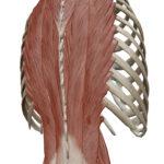慢性腰痛になりやすい人の特徴